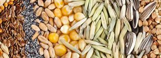 seeds - from simple beginnings