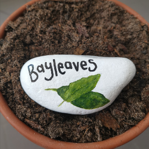 Bay leaves stone label for herb garden